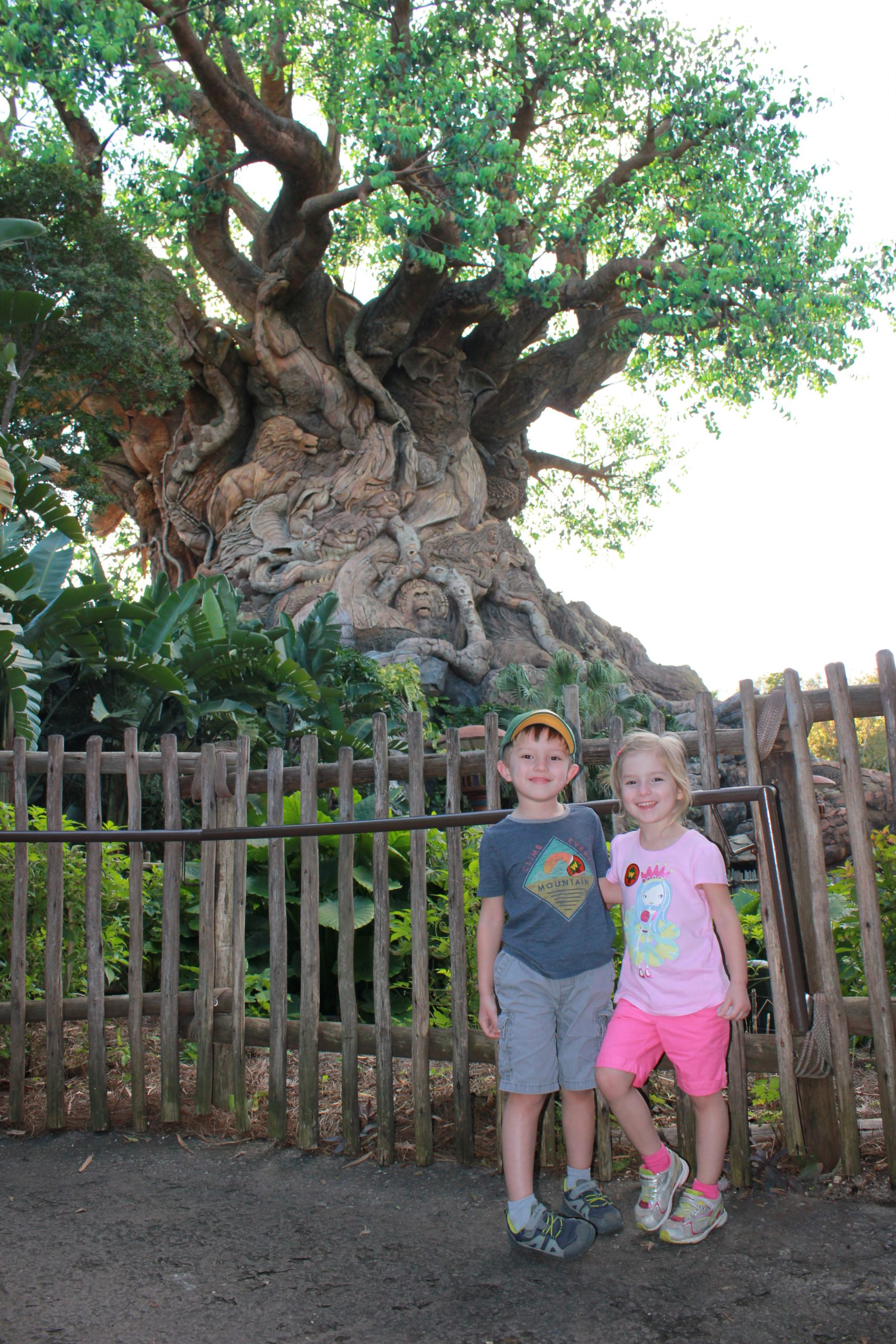 Cernys Journeys Tree of Life Disney World