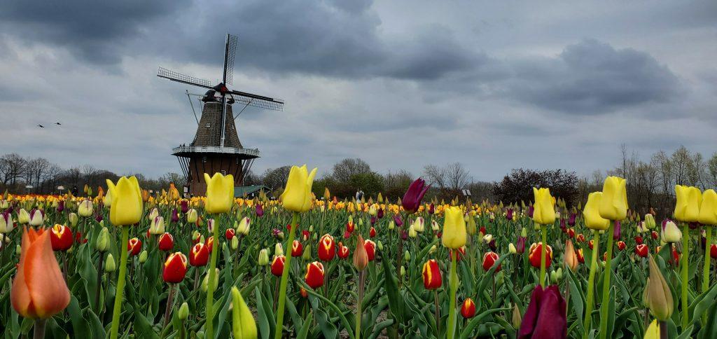 Cernys Journeys: Windmill Island Acres Holland MI